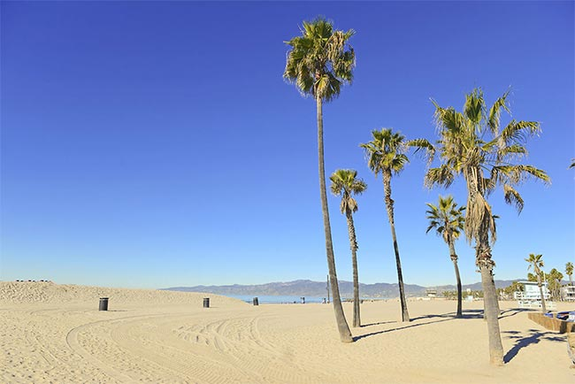 Beginnings-Treatment-Center-Southern-California-Beach-with-Palm-Trees-177485633