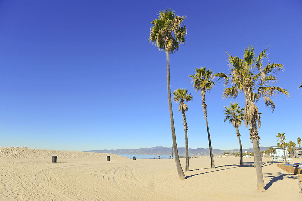 Beginnings Treatment Center Southern California Beach With Palm Trees 177485633
