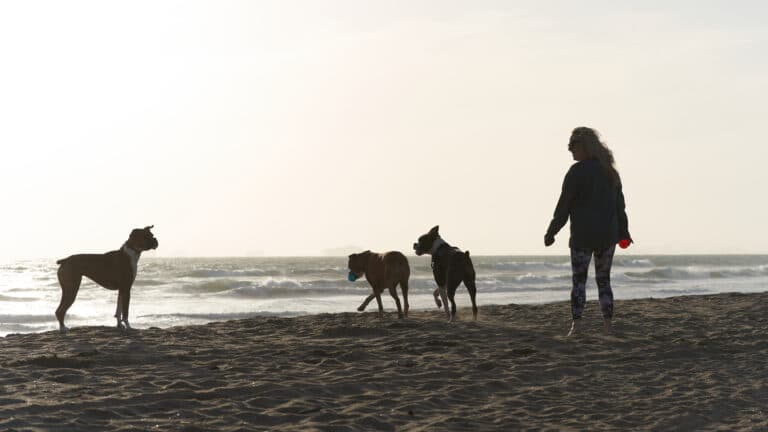 Woman with dogs walking on a beach